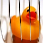 stuck_duck
